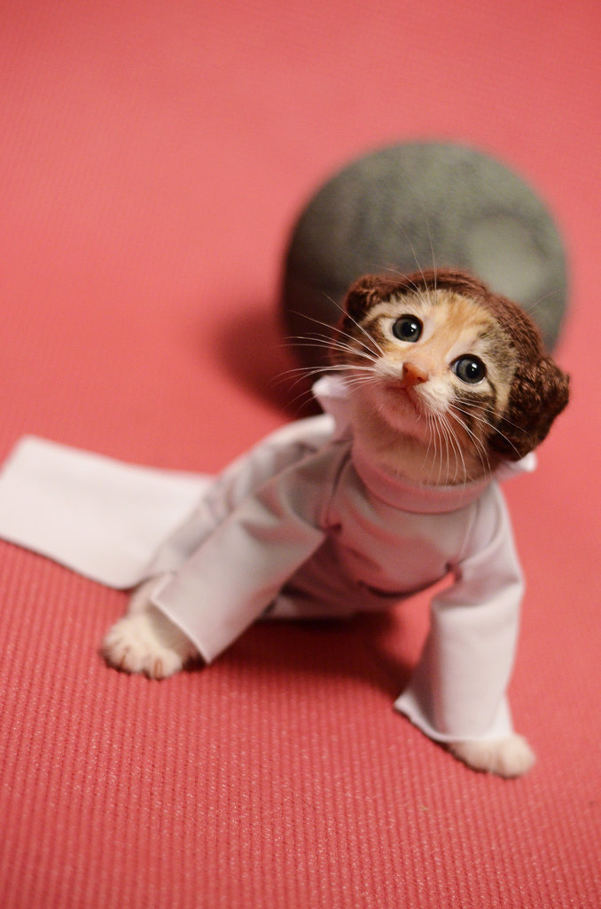 Cat-Dressed-Princess-Leia